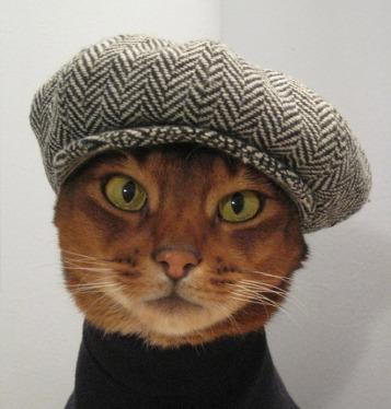 cat-hat6