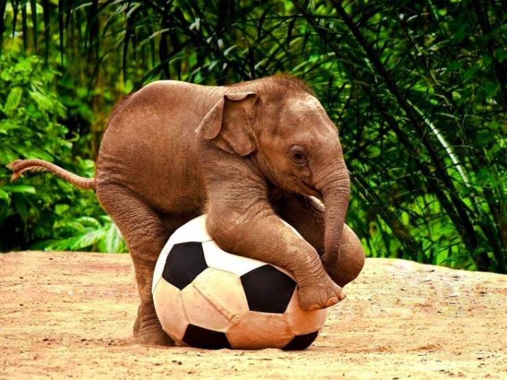 Cute-Elephant-baby-Kid-Wall-Paper-.jpg