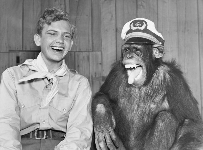 laughing-boy-scout-monkey-wearing-hat.jpg.653x0_q80_crop-smart