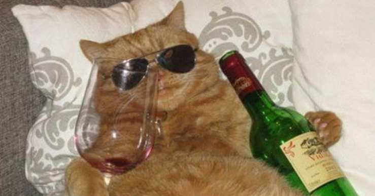 cat-drinking-red-wine-social